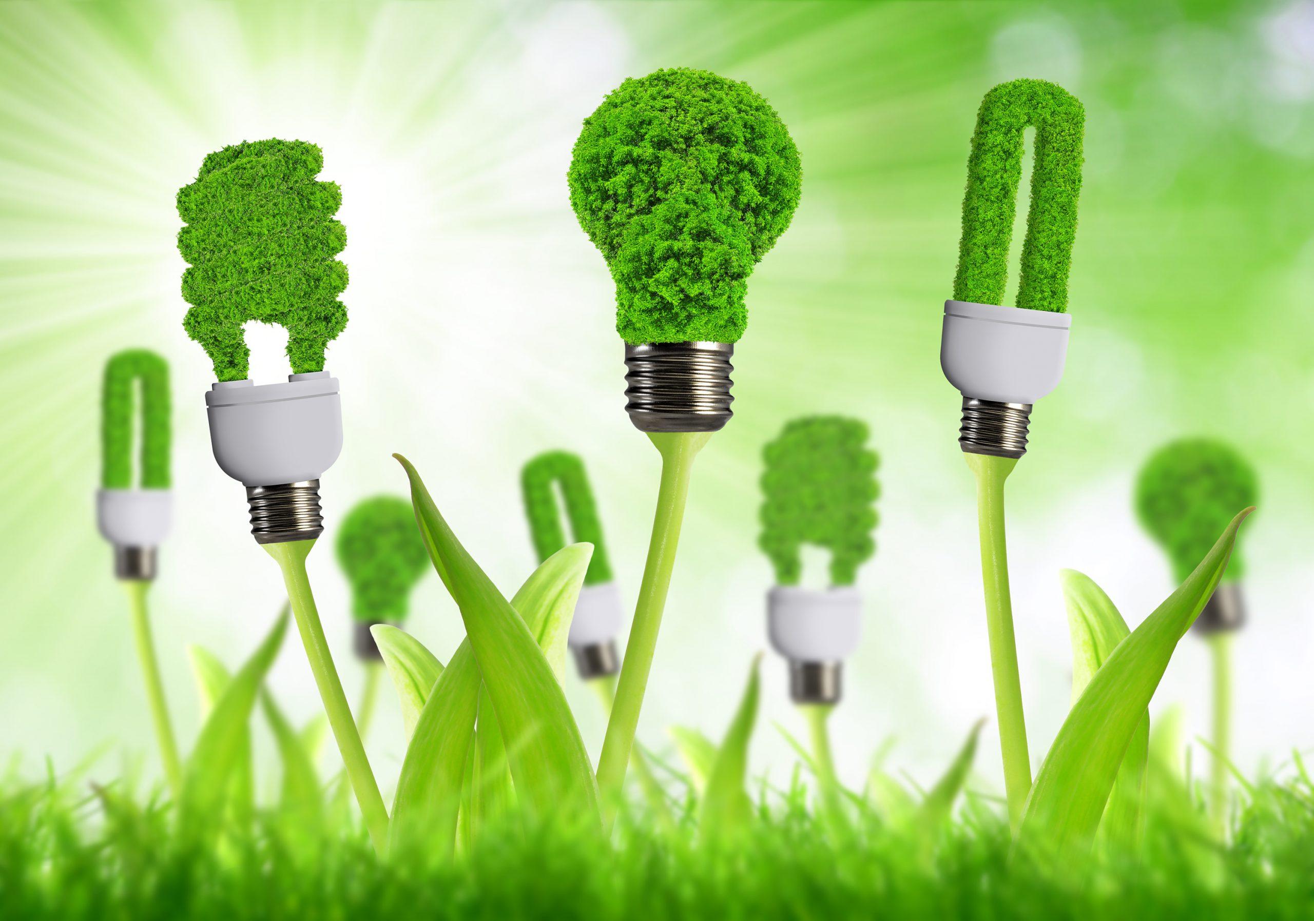 eco energy bulbs